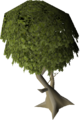 Mature juniper tree.png