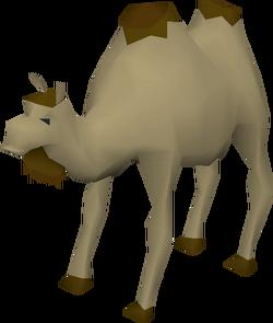 Al the Camel