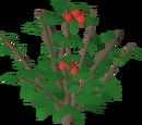Redberries