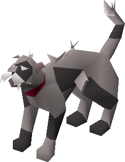 Wily cat (white and black) pet