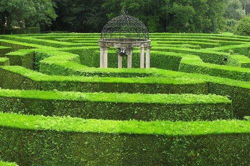 Alistair Hedge Maze