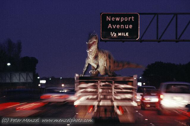 File:Allosaurus transport.jpg