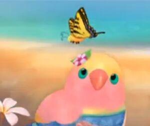 3rd & Bird Butterfly