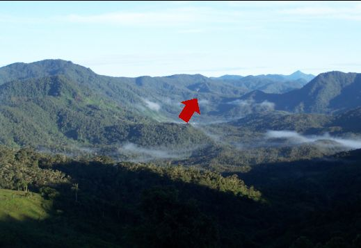File:Yellow-tailed wooly monkey habitat.jpeg