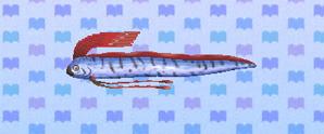 Oarfish | Animal Crossing: New Leaf Wiki | FANDOM powered ... Oarfish Animal Crossing