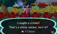 CricketCatch