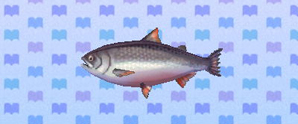 File:KingSalmon.jpg