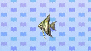 File:298px-Angelfish.png