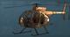 AoA Icon Little Bird