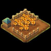 Clover harvest