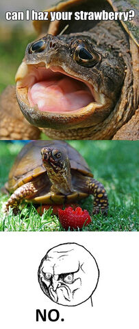File:Funny-turtle-eating-strawberry-happy.jpg