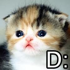 File:Sad kitty.jpg