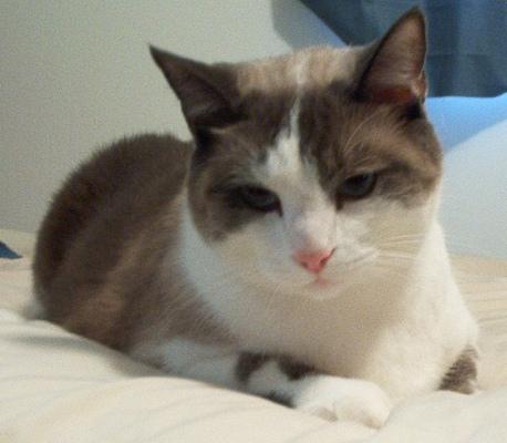 File:Cat-heiki bed1.jpg
