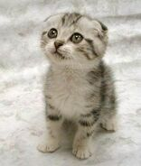 A aaa-Cute-Cat-3