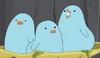 Baby Birds TCAWH
