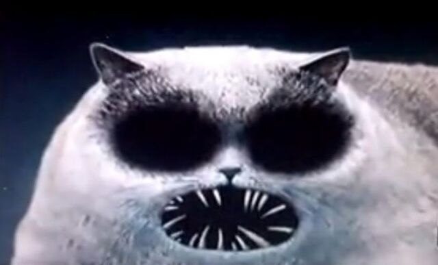 File:Flapjack cat by IsolaLuu13.jpg