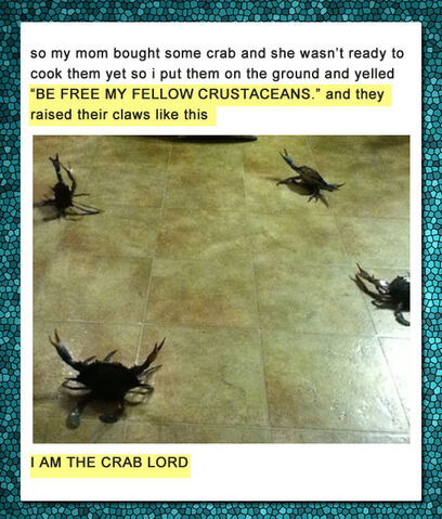 File:Funny-kid-crab-lord-cooking.jpg