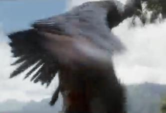 File:Condor.png