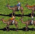 Camelriders