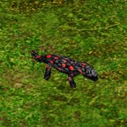 Warsalamander