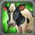 Cattle U