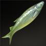 Chinese Silverfish.png