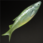 Estuarine Tapertail Anchovy.png