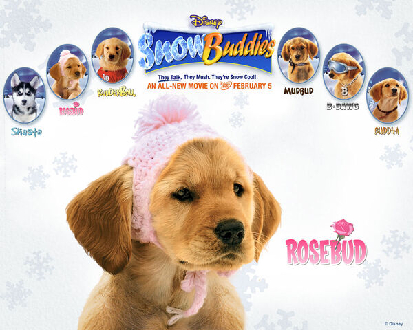 File:Snow buddies rosebud.jpg