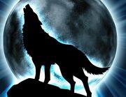 Fantasy-wolf-fantasy-23244805-718-555