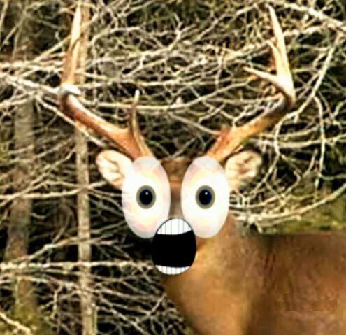 File:Deerfest!.jpg