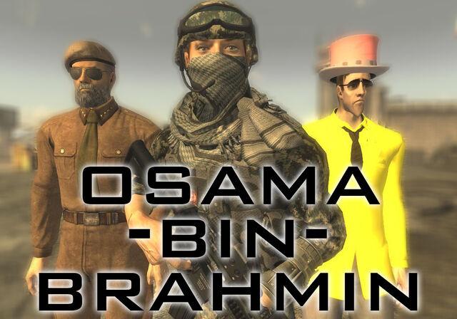File:Brahmin.jpg