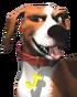 Dog's Life-Jake