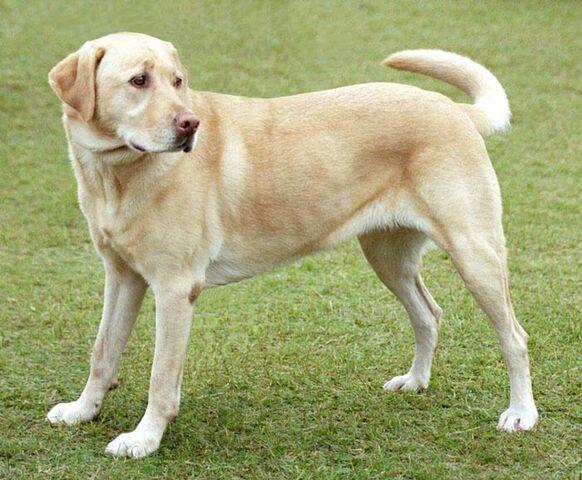 File:The Dog.jpg