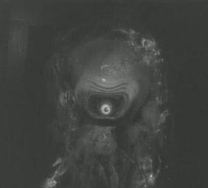 Alien ICFOS