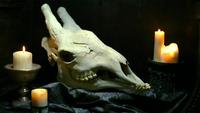 Xindi-avian-skull