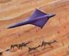 Thumbnail for version as of 05:52, September 9, 2008
