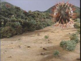 Gororin rolls around the island.