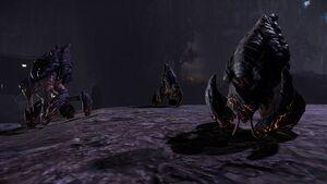 Obsidian Beetle