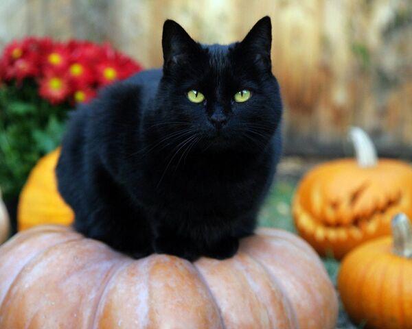 File:Black-Cat-random-32500173-1280-1024.jpg