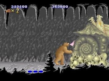 Bear-366x275