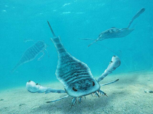 File:800px-Eurypterus Paleoart.jpg