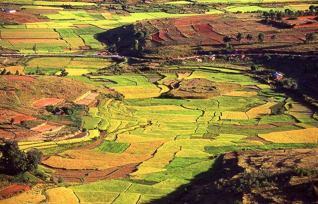 File:Sanafah Fields.jpg