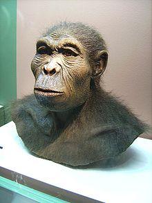 File:220px-Homo habilis.jpg