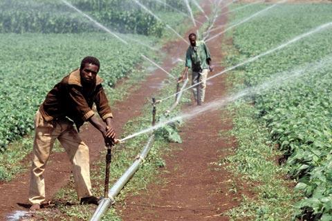 File:Malagasy Farmers.jpg