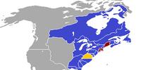 United States of America (Borgo)