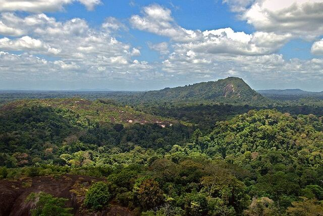 File:800px-Amazon jungle from above.jpg
