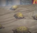 Suck Toads