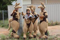 Parent Child Kangaroos Display