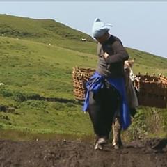 Ari & Staella struggle walking their donkey back to the farm entrance.