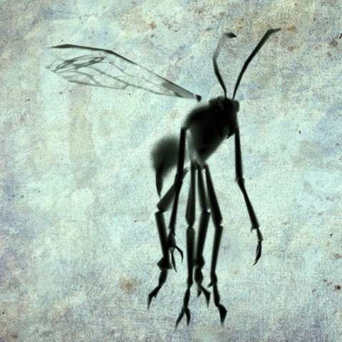 File:Samurai Ink Wasp render.png